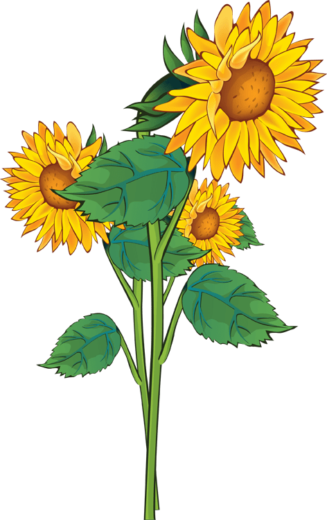 free sunflower background cliparts