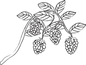 Blackberry clipart black and white