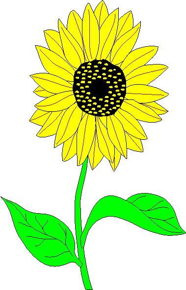 free cartoon sunflower cliparts