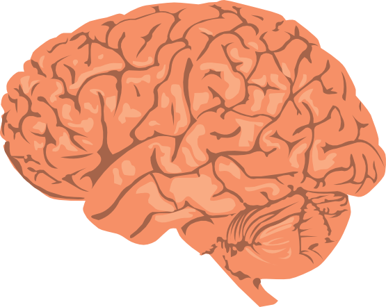 Free Brain Drawing Cliparts, Download Free Clip Art, Free