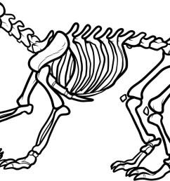 dinosaur bones clipart dinosaur dinosaur skeleton clipart [ 1504 x 944 Pixel ]