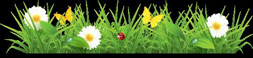 small resolution of grass
