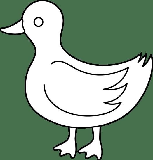 free duck white cliparts