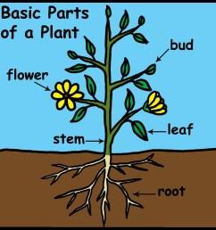 plant science clipart [ 1200 x 1200 Pixel ]
