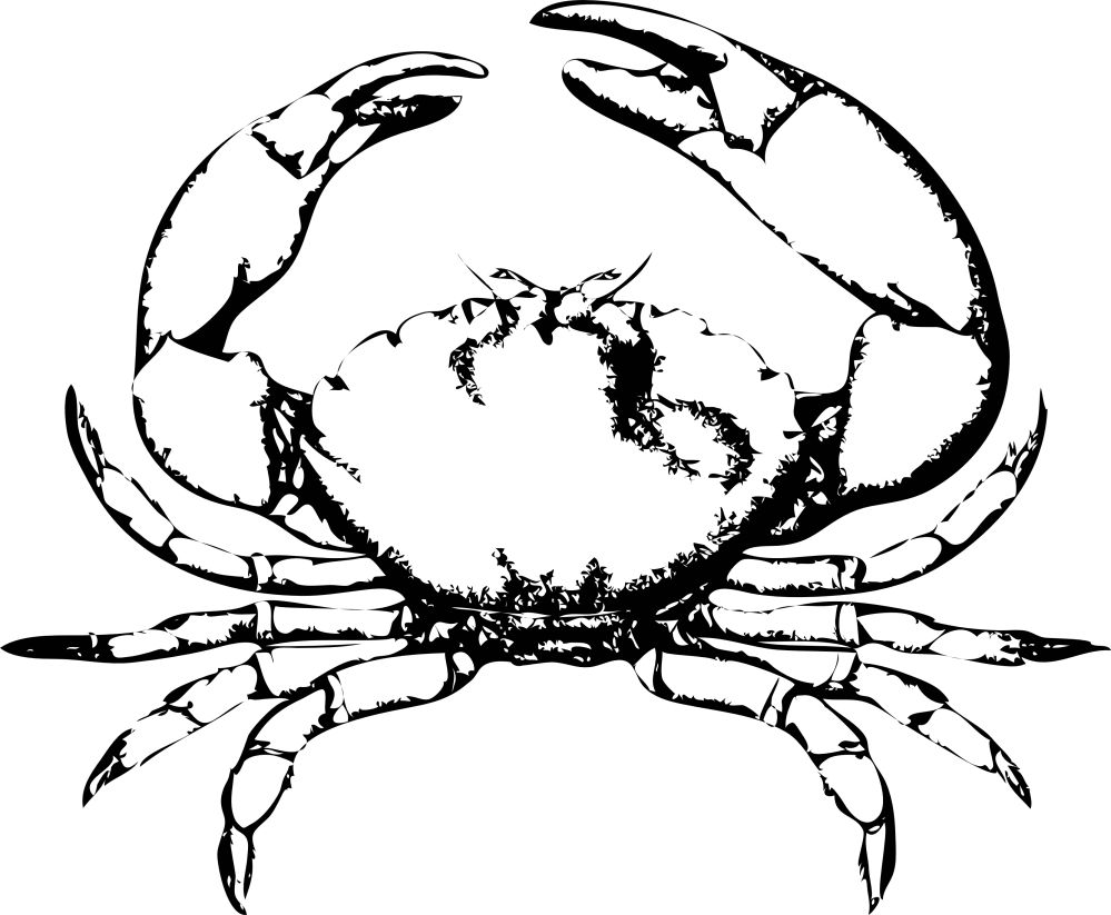 medium resolution of blue crab clipart black and white