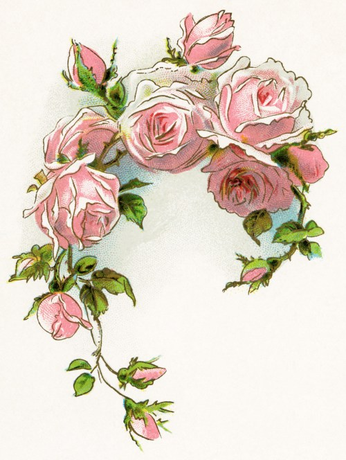 small resolution of flowers vintage clipart flowers
