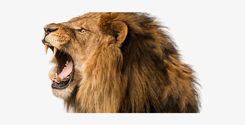 Lion Roaring Png Clip Art Library