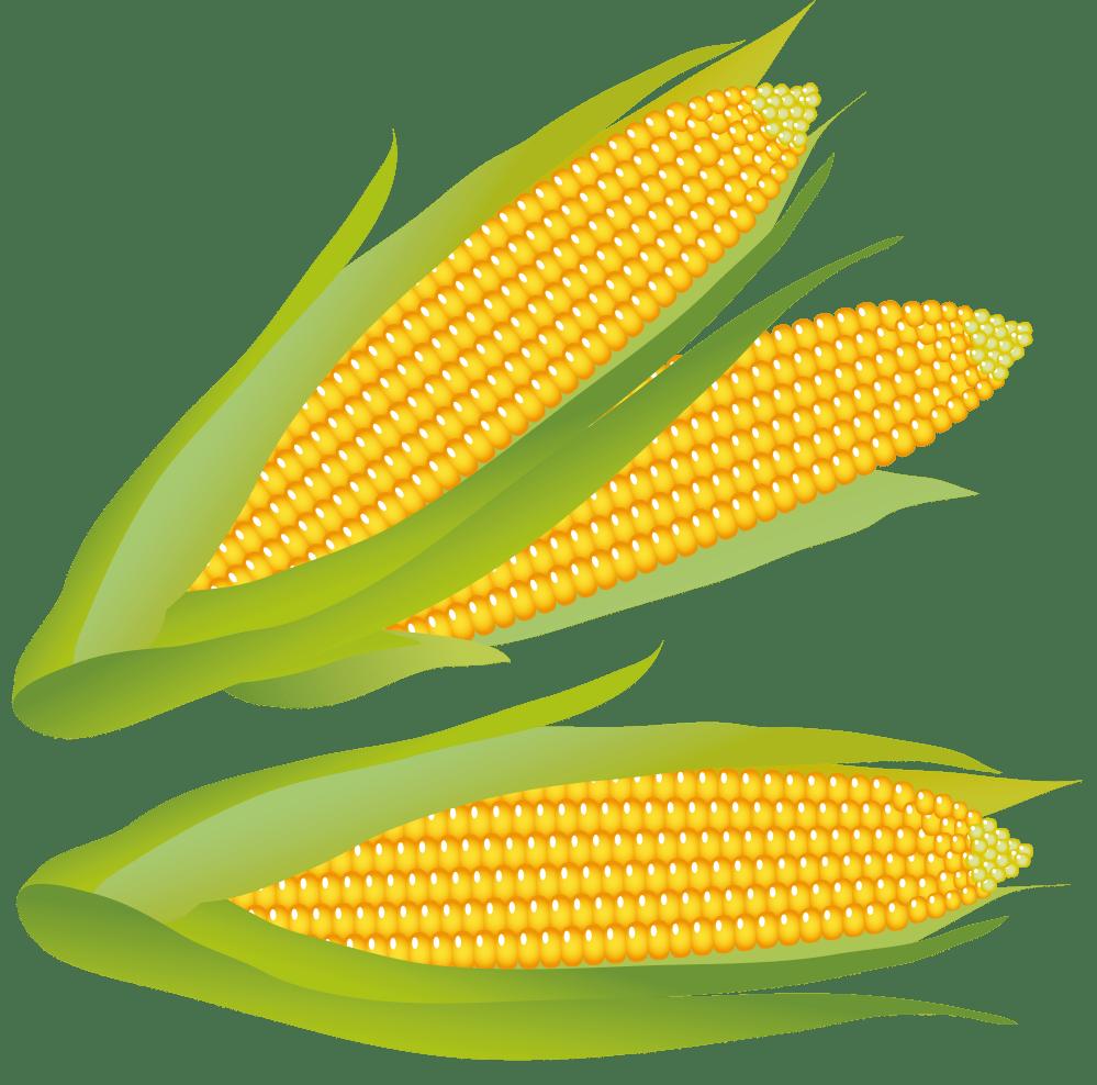 medium resolution of corn clip art free free clipart images 4