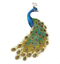 free peacock clipart the cliparts [ 3600 x 3600 Pixel ]