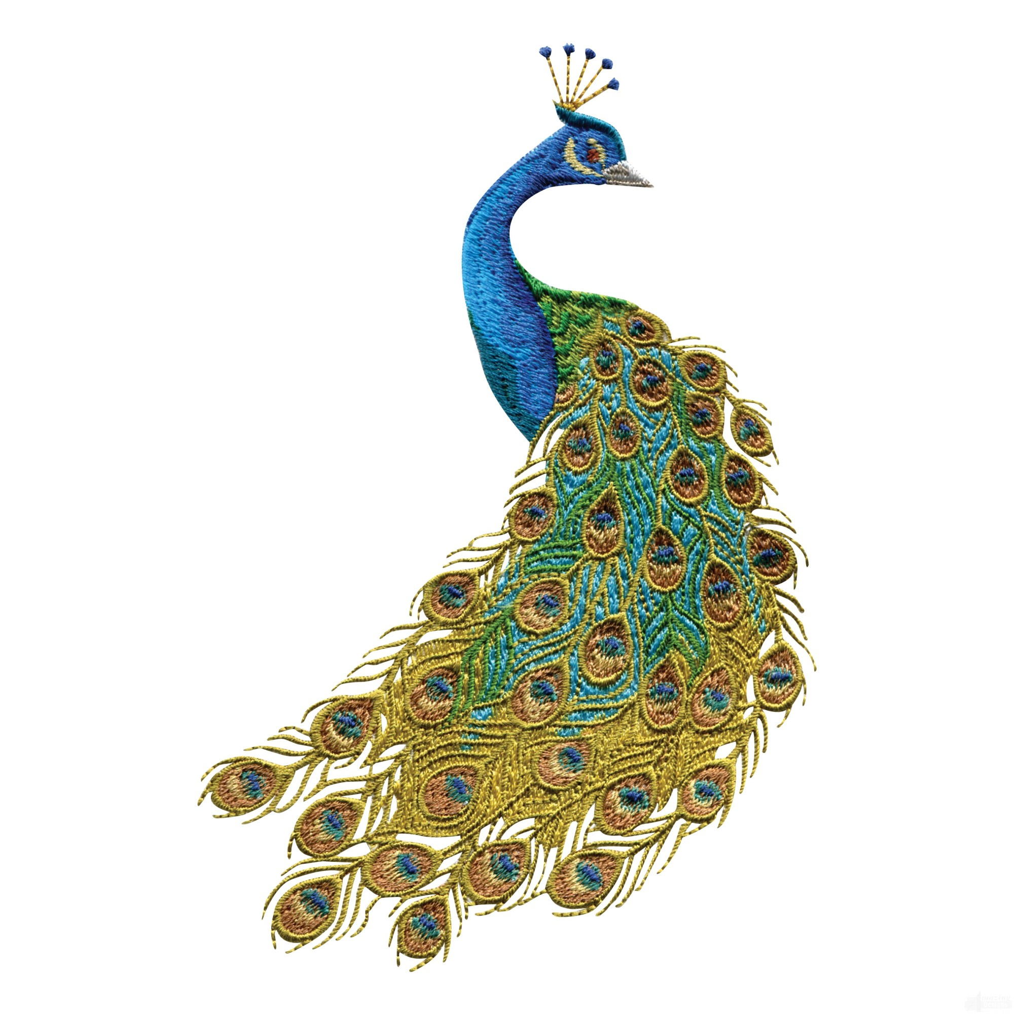 hight resolution of free peacock clipart the cliparts
