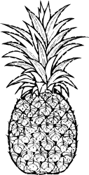 Free Pineapple Outline Png Download Free Clip Art Free Clip Art on Clipart Library