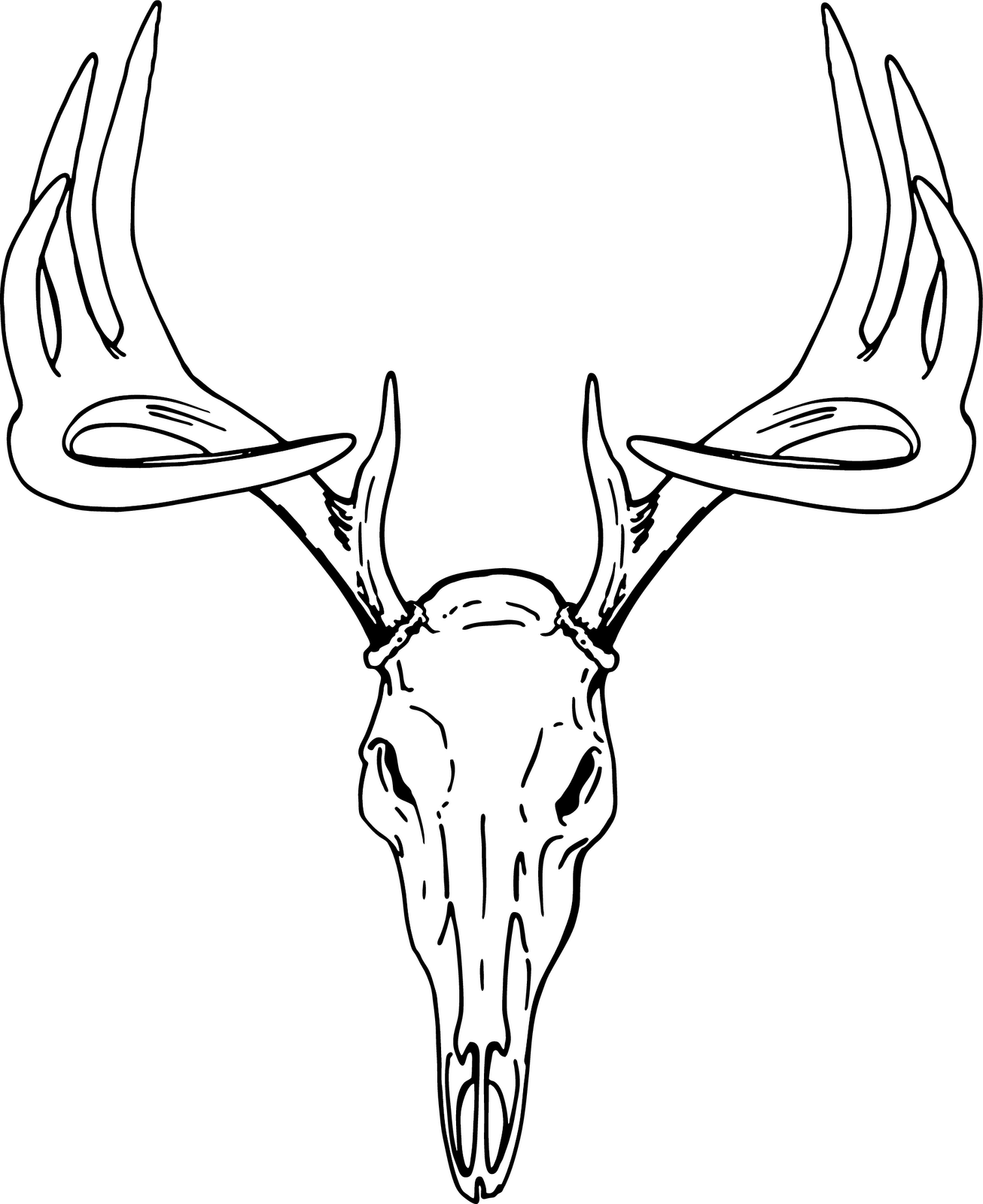Deer Skull Clipart : skull, clipart, Skull, Mount, Drawing, Library