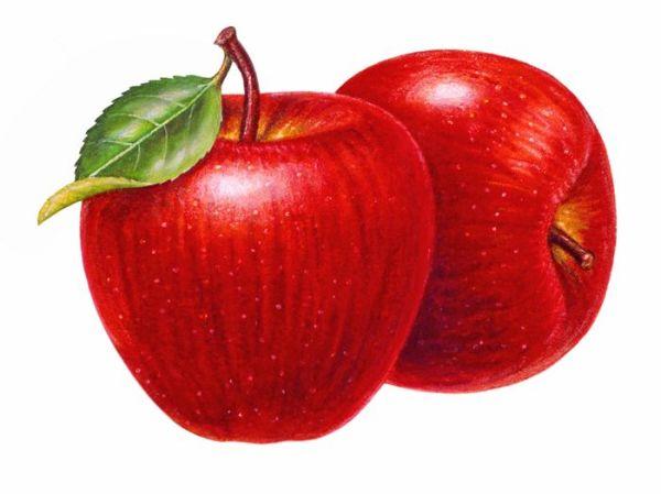 apple clip art free