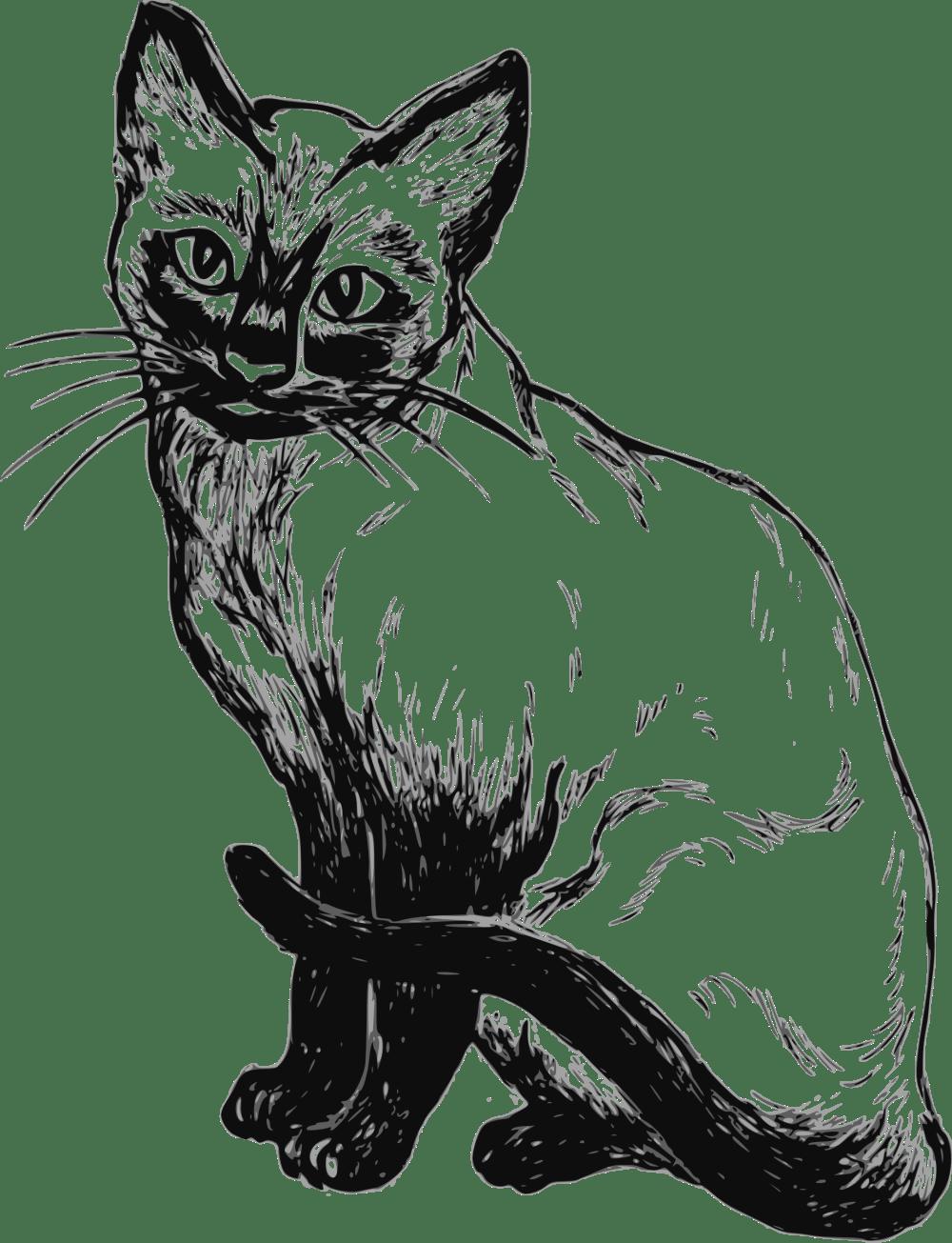 medium resolution of cat