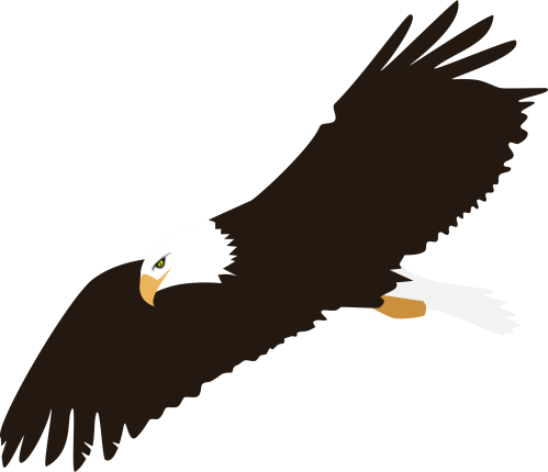 small resolution of eagle