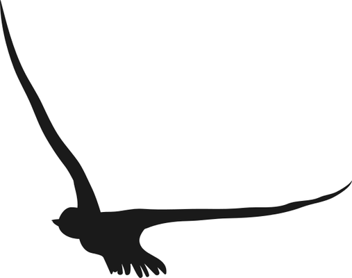 Picture of a flying bird