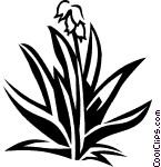 yucca Vector Clip art