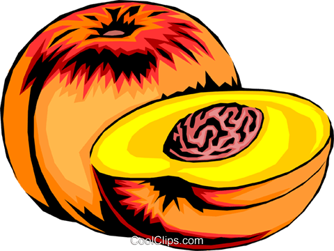 sliced peaches royalty free vector