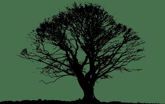 Black Tree PNG Photos