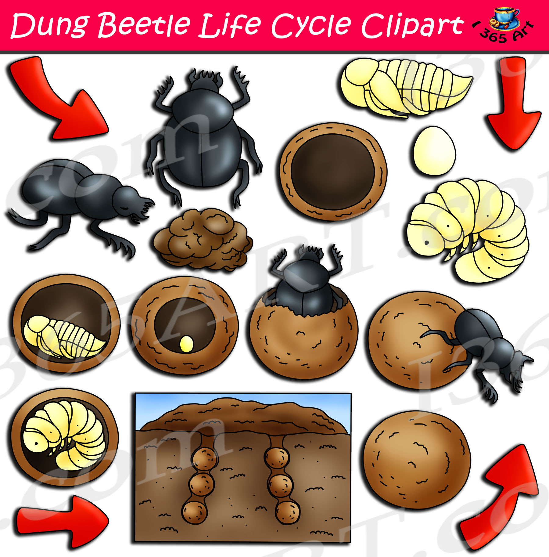 Dung Beetle Life Cycle Clipart Set