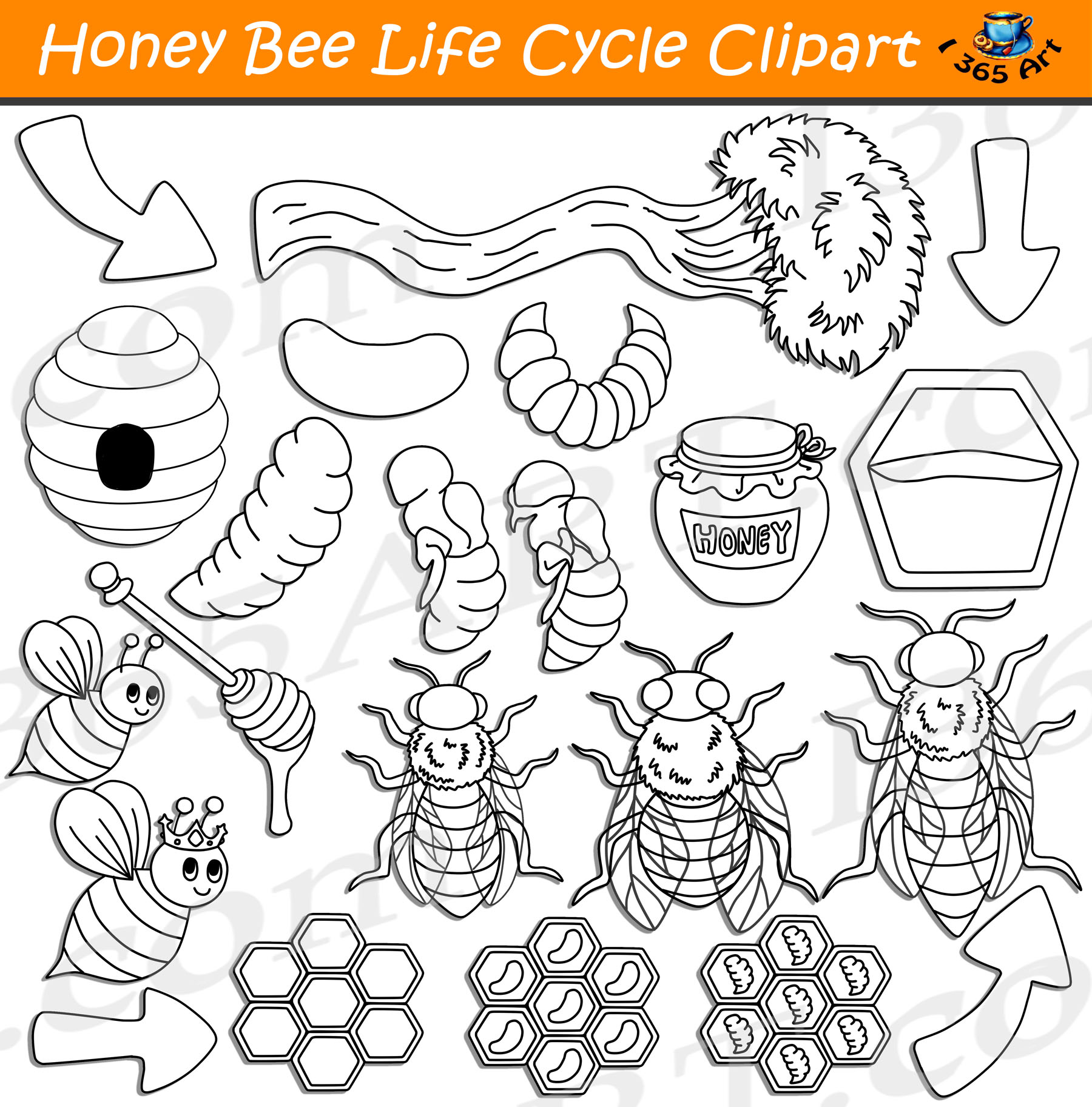 Honey Bee Life Cycle Worksheet