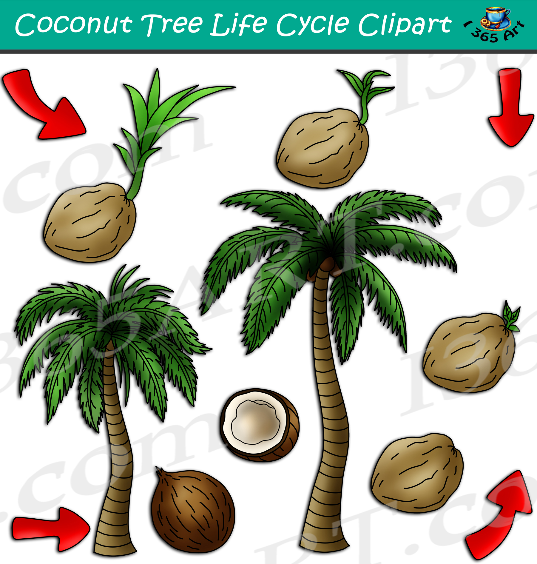 Coconut Tree Life Cycle Clipart Set Download