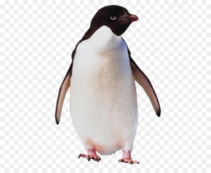 penguin adelie clipart emperor bird clip ad antarctica library
