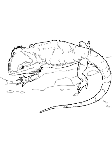 Bearded Dragon Svg Free : bearded, dragon, Library, Bearded, Dragon, Picture, Transparent, Download, Black, White, Files, ▻▻▻, Clipart