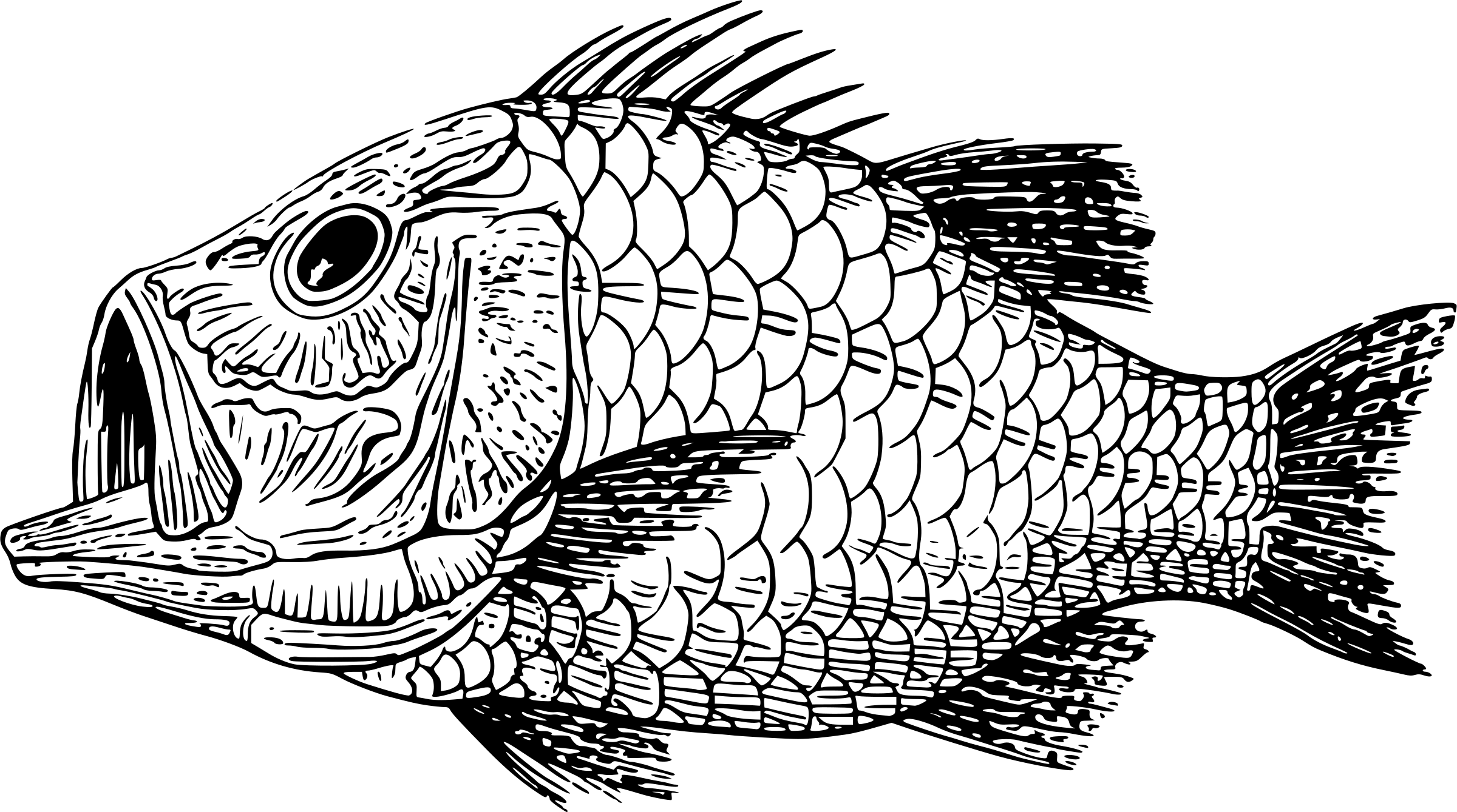 Download Vector line art of tropical fish. Library of bluegill fish picture library png files Clipart 1svg.com