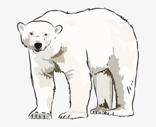 polar bear clipart clip bears kid clipground