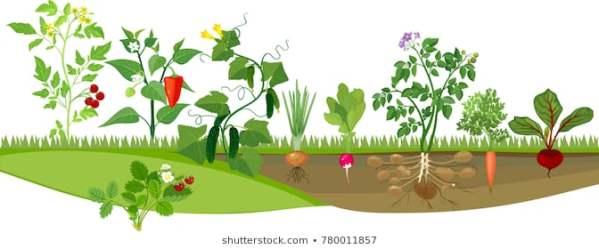 garden vegetable clipart backyard healthy svg unusual illustrations