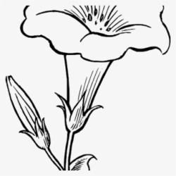 flower lily clipart stem transparent clip banner