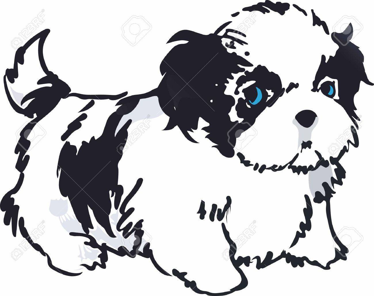 Library Of Shih Tzu Puppies Free Download Files
