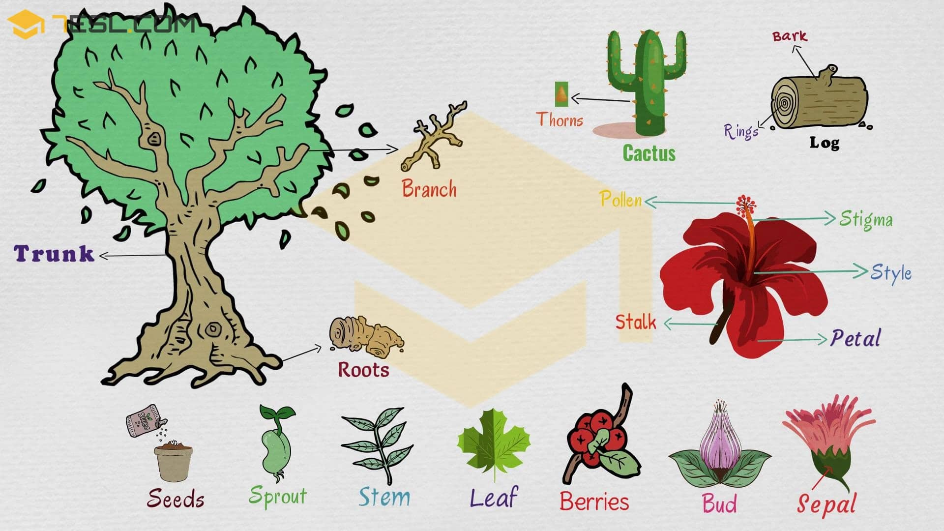 Library Of Tree Trunk Stock Space For A Vocabulary Word