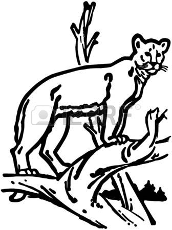 Library of treed mountain lion clip royalty free stock