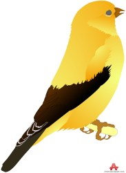 bird canary clipart yellow clip orange cartoon cliparts library standing transparent clipartbarn cliparting clipground load