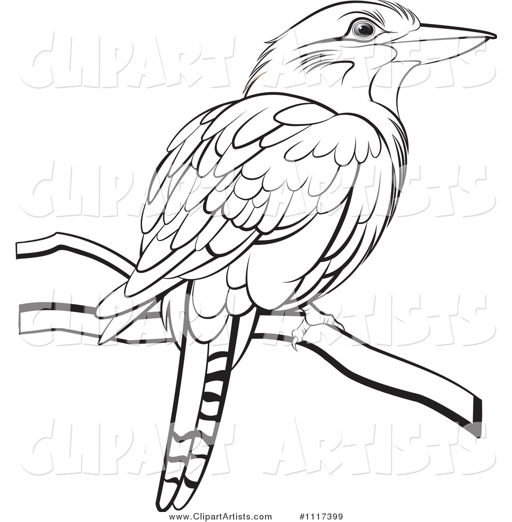 Kookaburra Coloring Sheet Printable Coloring Pages