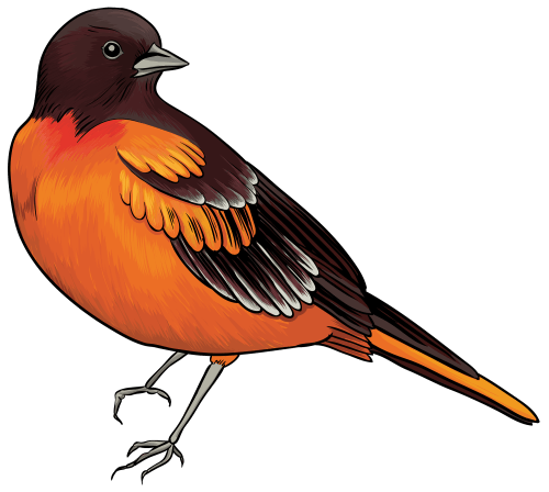 small resolution of black and orange bird clipart web clipart