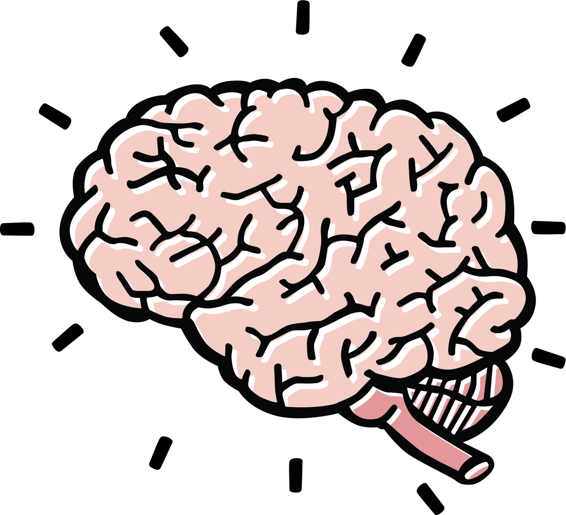 hight resolution of brain clipart 4 clipartix