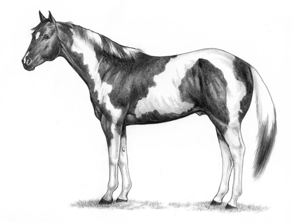75 Free Horse Clipart