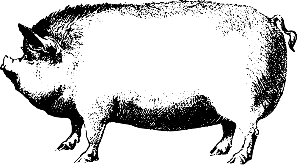 medium resolution of face pig clipart pig animal clip art downloadclipart org