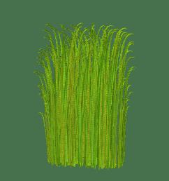 grass clipart transparent image [ 900 x 900 Pixel ]