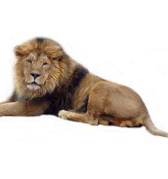 lion clip art black and white free clipart images clipartix [ 1024 x 768 Pixel ]
