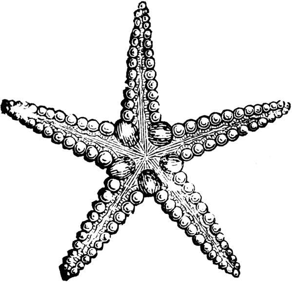 Starfish Cartoon Black And White
