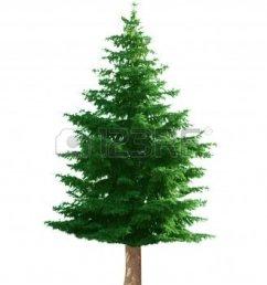 pine tree clip art image 29469 [ 987 x 1200 Pixel ]