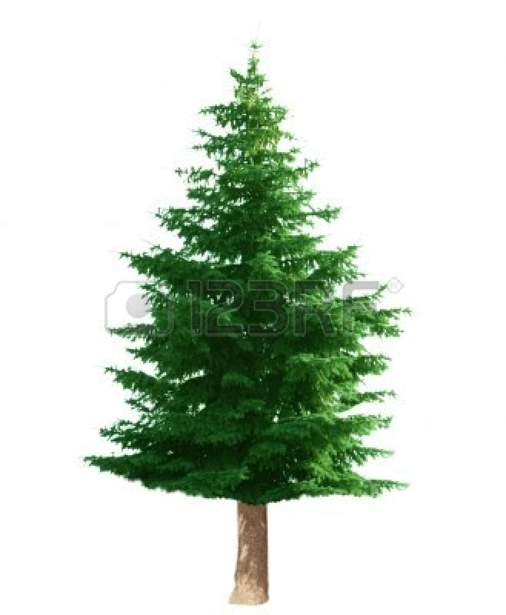 medium resolution of pine tree clip art image 29469