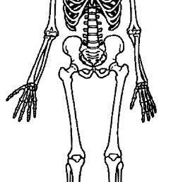 skeleton clipart free download clip art on 4 [ 884 x 1995 Pixel ]