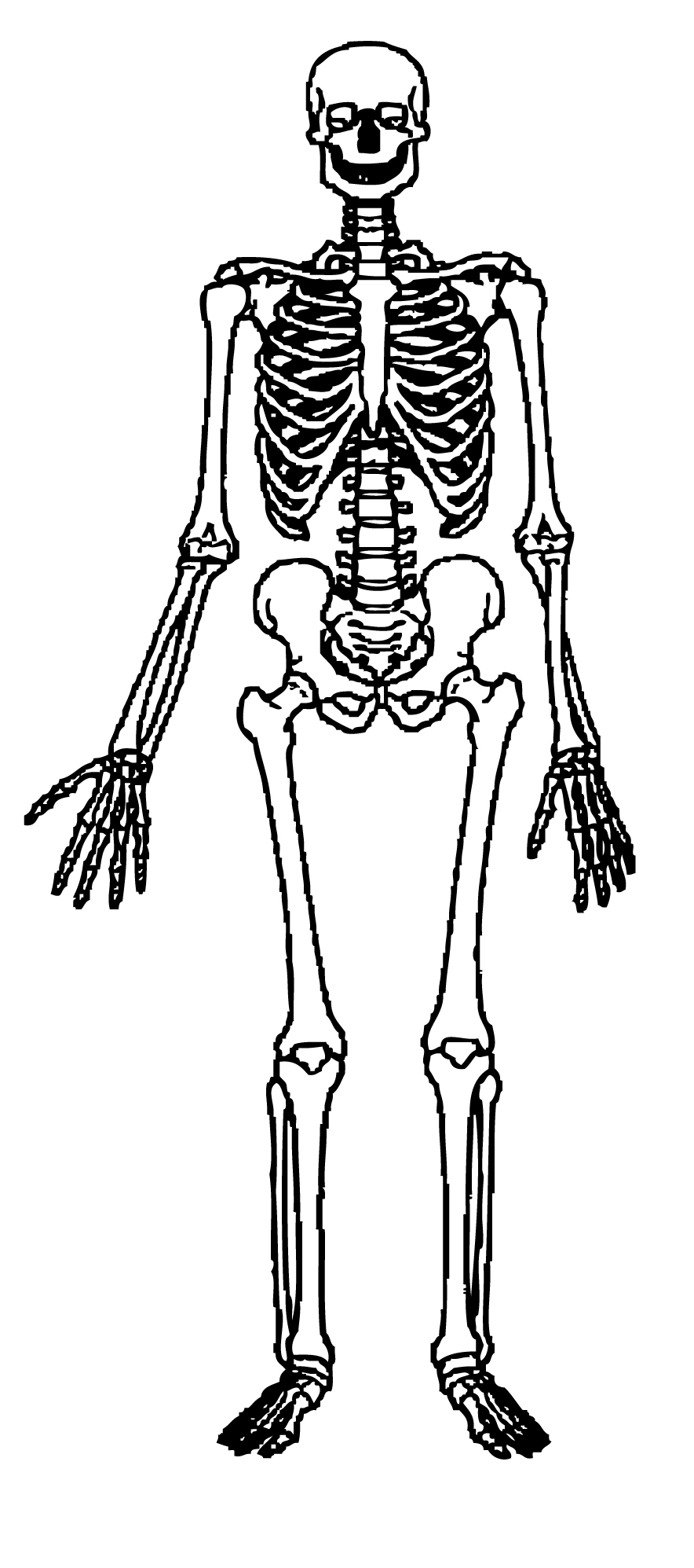 hight resolution of skeleton clipart free download clip art on 4