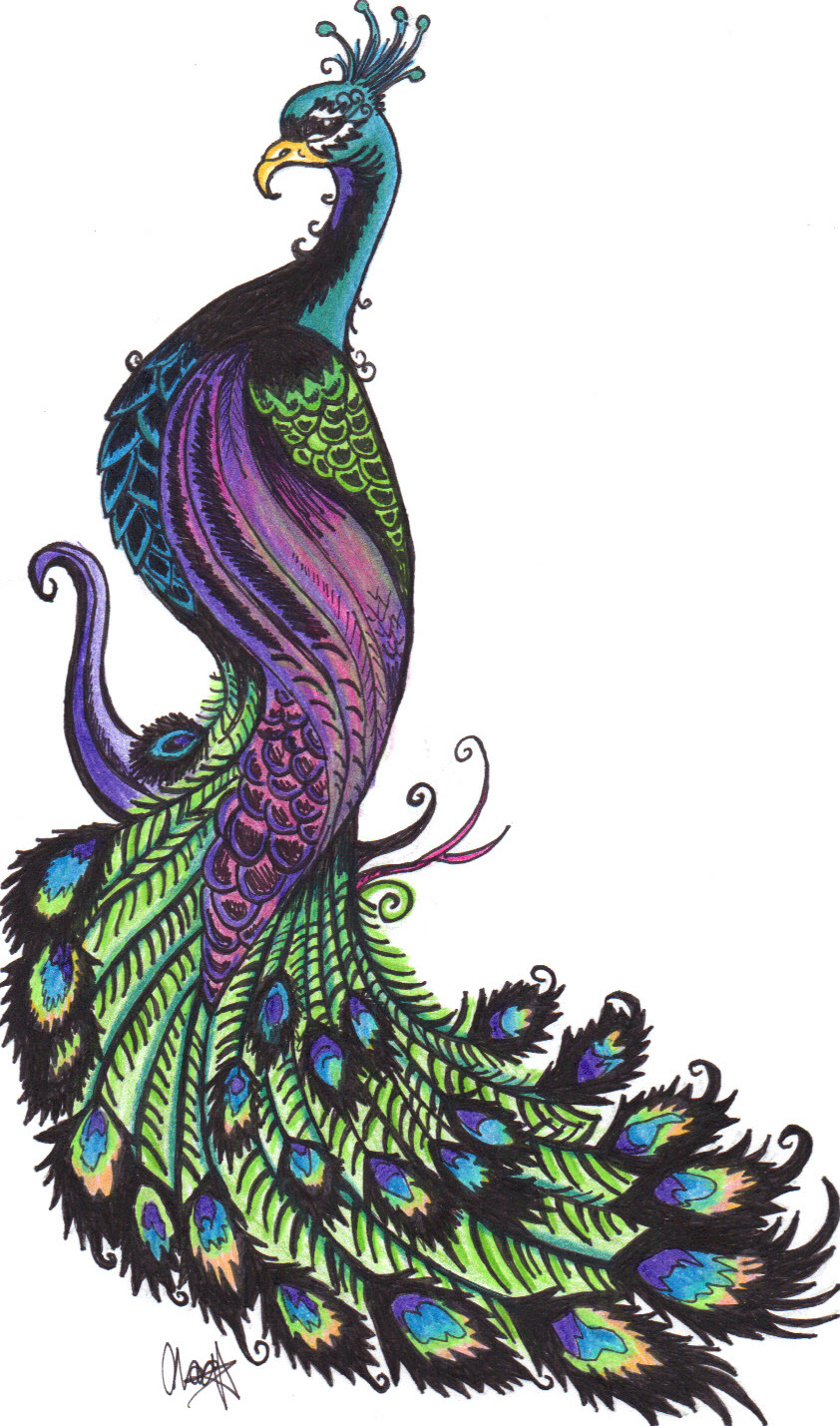 hight resolution of animals clipart peacock gallery free images