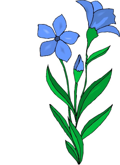 small resolution of parts of a plant clipart free images 4